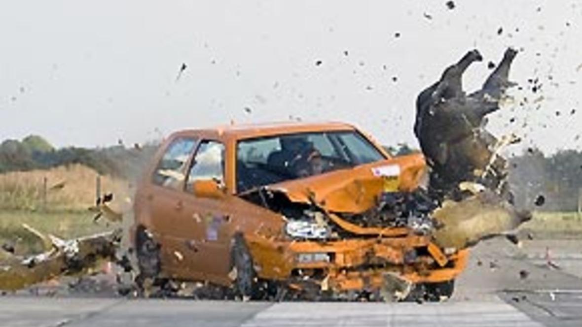 ADAC fordert die systematische Erfassung von Wildunfällen - autohaus.de