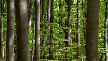 Wald, CO2-Emissionen; klimaneutral; Umweltschutz, CO2-Ziele; Klimaerwärmung